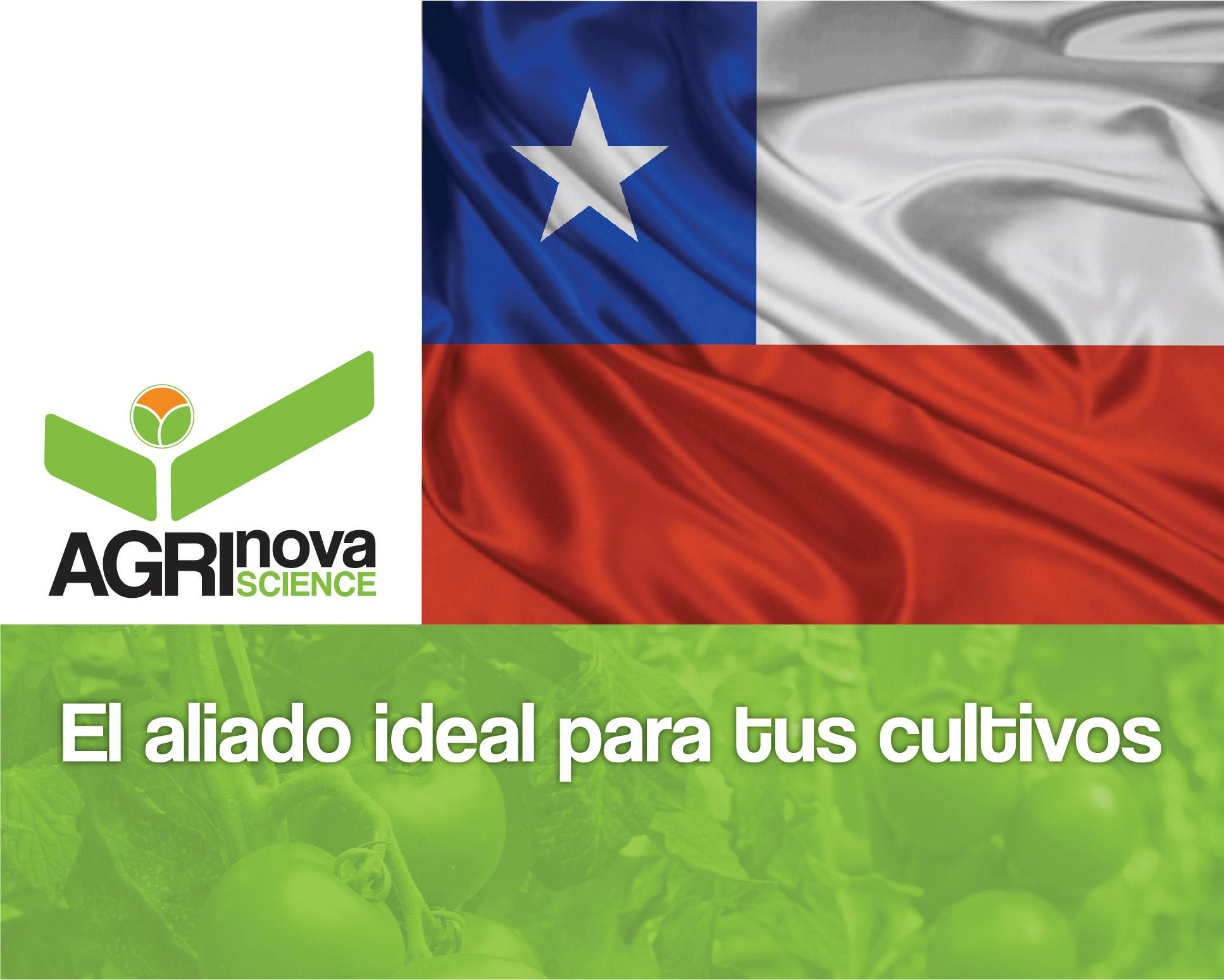 montaje_bandera_chilena_agrinova