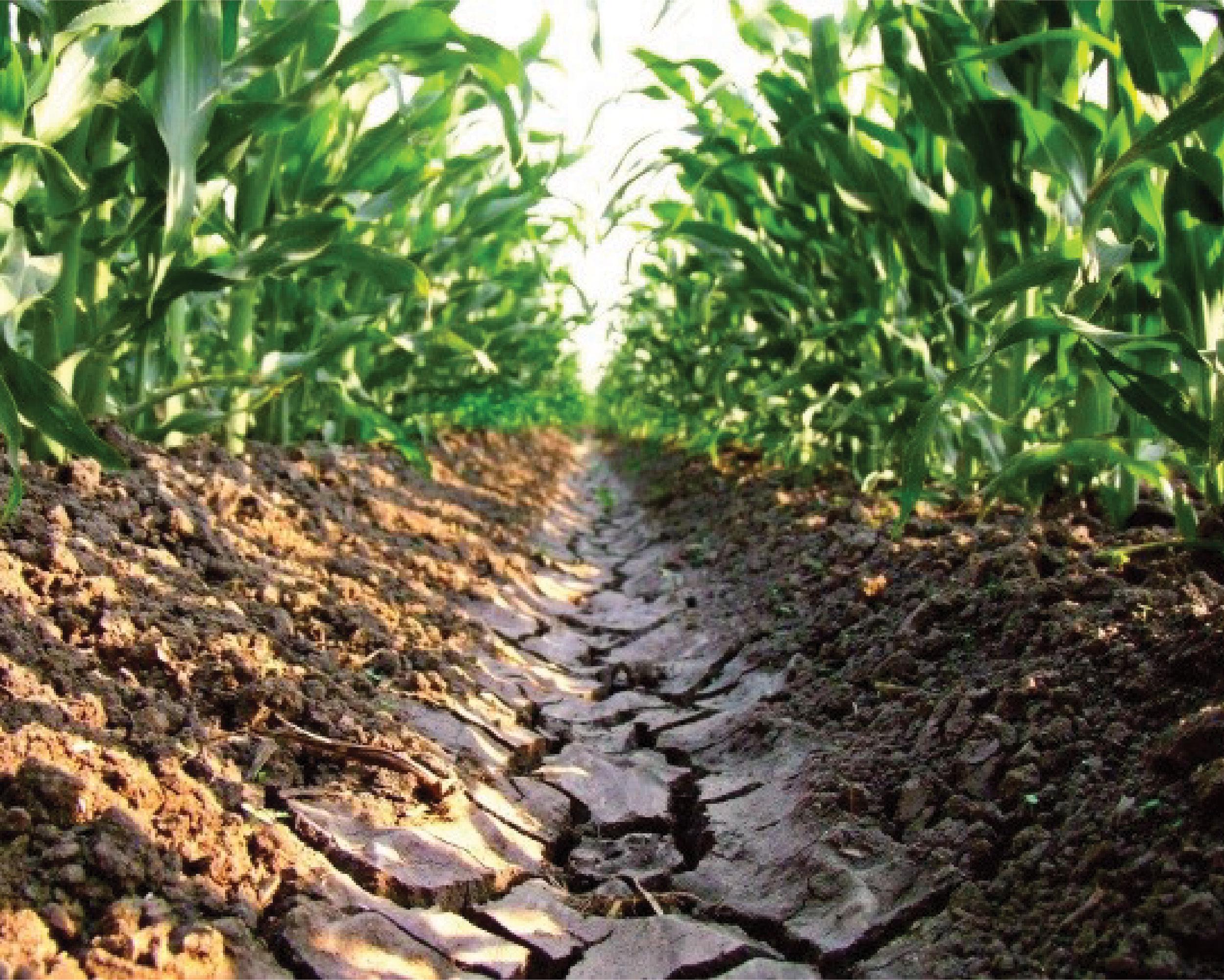 C mo entender la conductividad el ctrica de nuestro suelo for Como estan formados los suelos