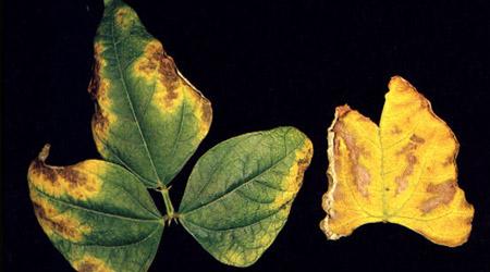 Importancia del potasio en el fruto agri nova science for Potasio para plantas