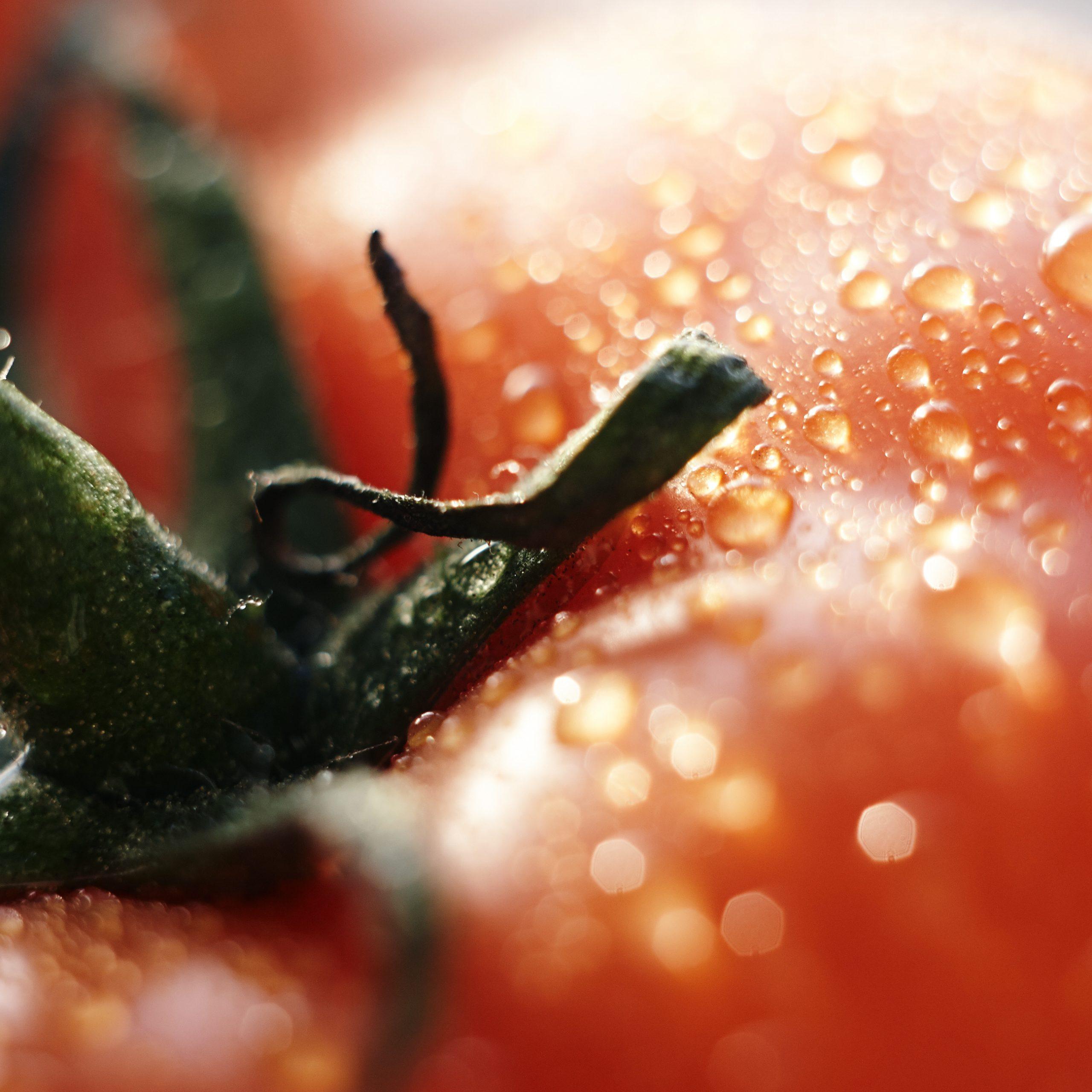 previene la humedad planta