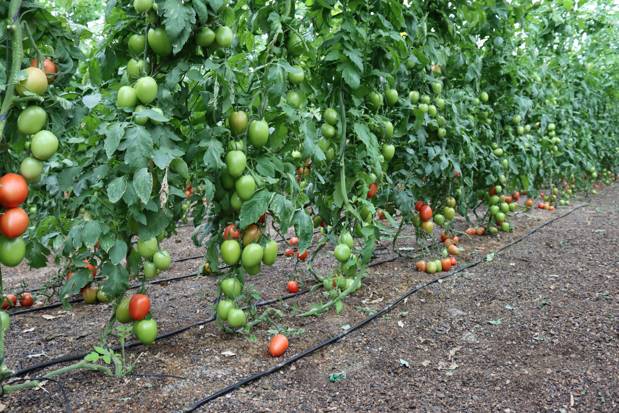 Mejora el terreno de tu cultivo