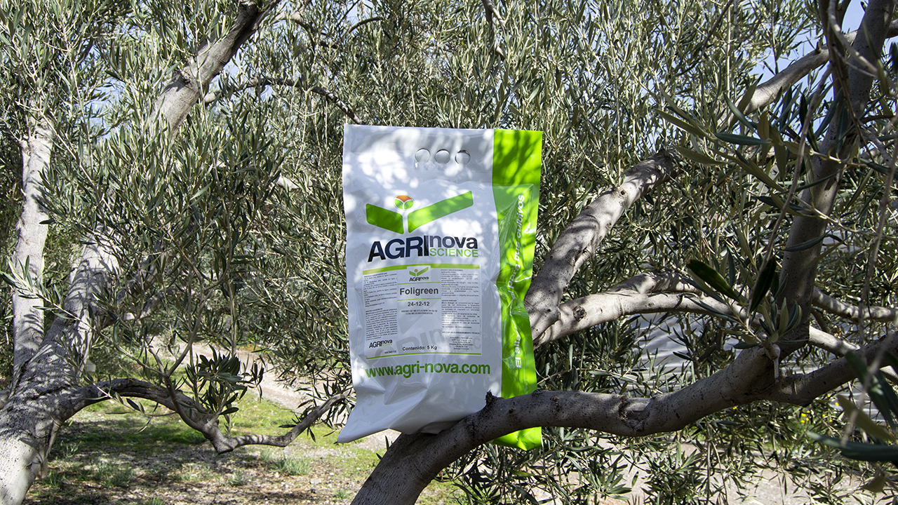 tratamientos nutricionales olivo