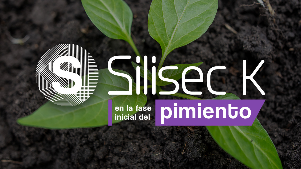 thumbnail-SilisecK-Pimiento